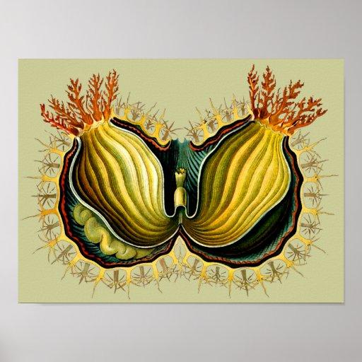 Cynthia melocactus, Ernst Haeckel Fine Vintage Poster