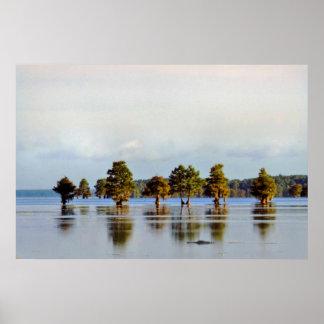 Cypress and Alligator Morning Print
