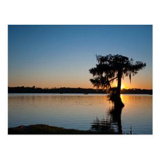 Cypress at Sunset Postcards