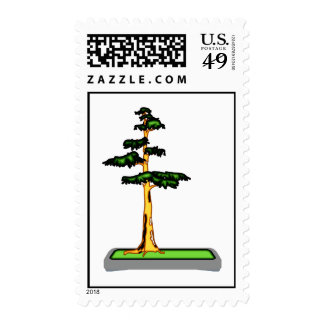 Cypress Bonsai in Tray Graphic Image Stamps