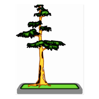 Cypress Bonsai in Tray Graphic Image Postcard