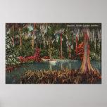 Cypress cultiva un huerto poster de la Florida