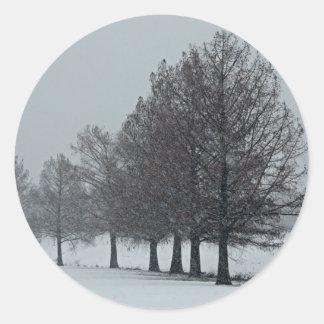 Cypress en el pegatina de la nieve