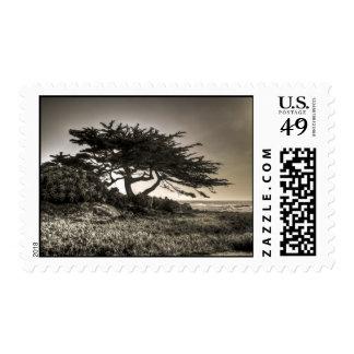 Cypress en la costa envio
