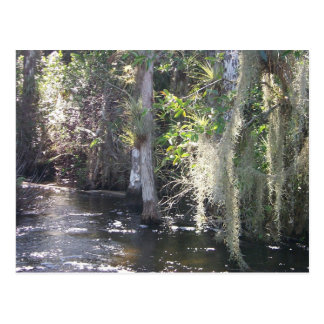Cypress grande postales