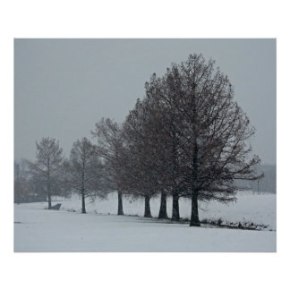 Cypress in the Snow poster