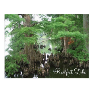 Cypress Knees at Reelfoot Lake Postcard