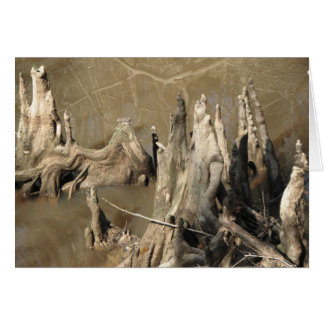 Cypress Knees Card