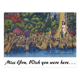 Cypress Knees Postcard