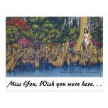 Cypress Knees Postcards