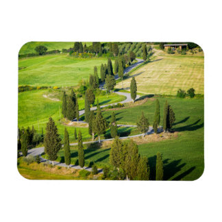 Cypress lined road in Tuscany rectangle magnet