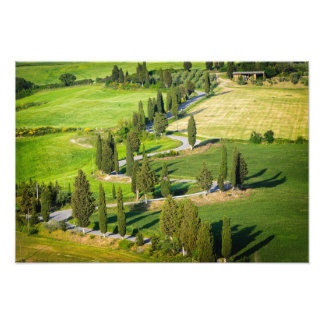 Cypress lined winding road in Tuscany Photo Print