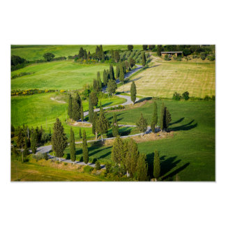 Cypress lined winding road in Tuscany Poster
