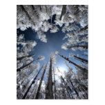 Cypress magnífico tarjetas postales