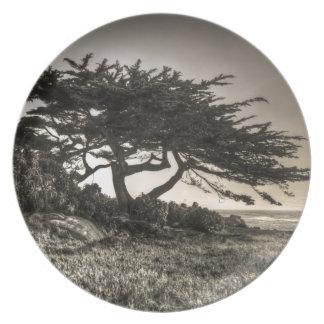 Cypress On The Coast Melamine Plate