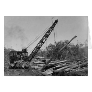 Cypress que explota los árboles en la Florida Ever Tarjeta De Felicitación