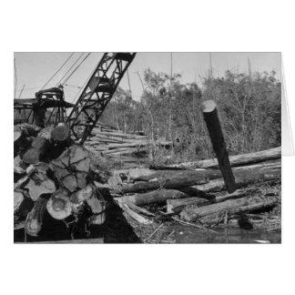 Cypress que explota los árboles en los marismas de tarjeta de felicitación