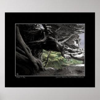 Cypress Skeleton - Poster