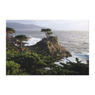 Cypress solitario - impresión estirada de la lona lienzo envuelto para galerías