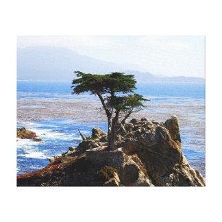 Cypress solitario, Monterey, California Impresiones En Lienzo Estiradas