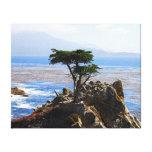 Cypress solitario, Monterey, California Impresiones En Lona Estiradas