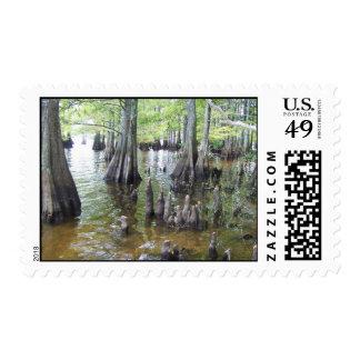 Cypress Tree Knees Postage Stamp