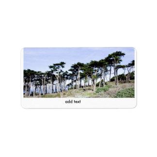 Cypress Trees at Sutro Park, San Francisco Custom Address Labels