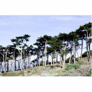 Cypress Trees at Sutro Park, San Francisco Photo Cutouts