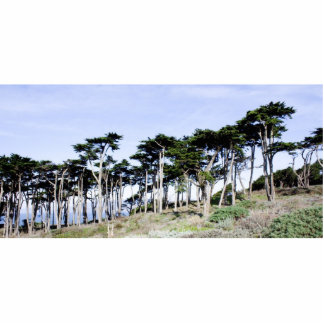 Cypress Trees at Sutro Park, San Francisco Photo Sculptures