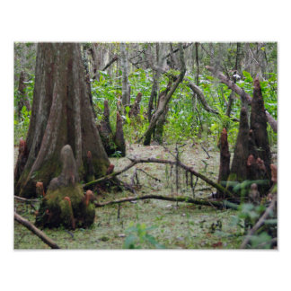 Cypress Trees in the Swamp Poster