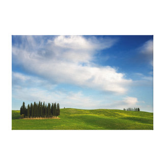 Cypress trees in Tuscany canvas