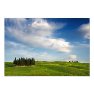 Cypress trees in Tuscany photo print