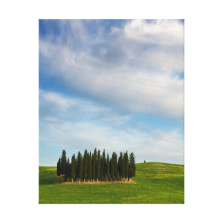 Cypress trees in Tuscany vertical canvas