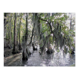 Cypress Trees on Lake Phelps NC Poster