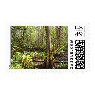 Cypress trees postage stamps