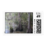 Cypress Trees Postage Stamp