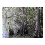 Cypress Trees Postcard