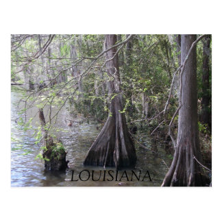 Cypress Trees Postcard