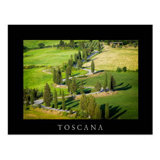 Cypress winding road in Tuscany black postcard