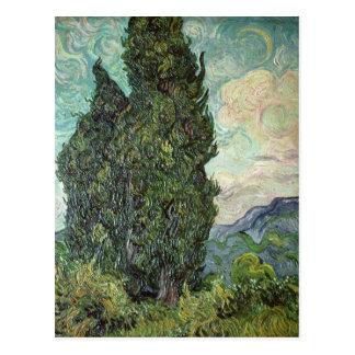 Cypresses, 1889 postcard