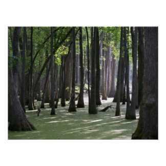 CypressSwampView Poster