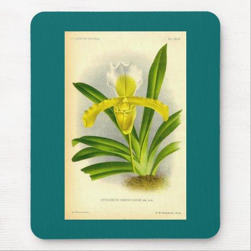 Cypripedium Insigne - orquídea del deslizador de s Alfombrillas De Ratón