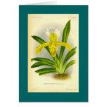 Cypripedium Insigne - orquídea del deslizador de s Felicitaciones