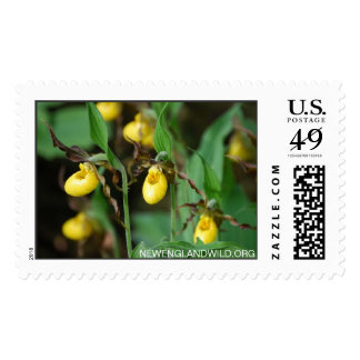 Cypripedium parviflorum var. makasin, yellow lady' postage