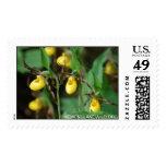 Cypripedium parviflorum var. makasin, yellow lady' postage stamp