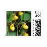 Cypripedium parviflorum var. makasin, yellow lady' postage