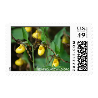 Cypripedium parviflorum, yellow lady's-slipper postage