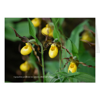 Cypripedium parviflorum, yellow lady's-slipper card