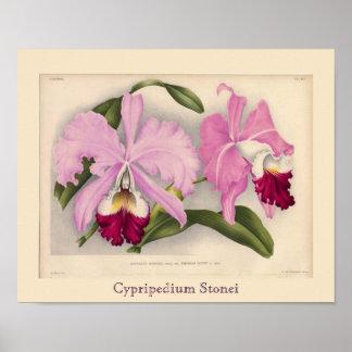 """Cypripedium Stonei"", Linden Orchid Poster"