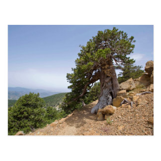 Cyprus Artemis nature trail troodos landscape Postcard